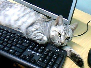 кошка автор